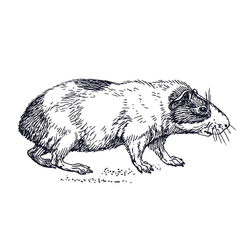 PCcaps® Hamsterkapseln weiß