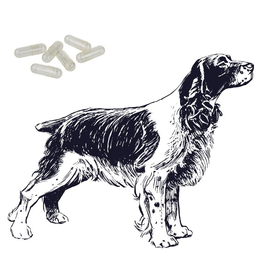 Hundekapseln klar - Größe 1