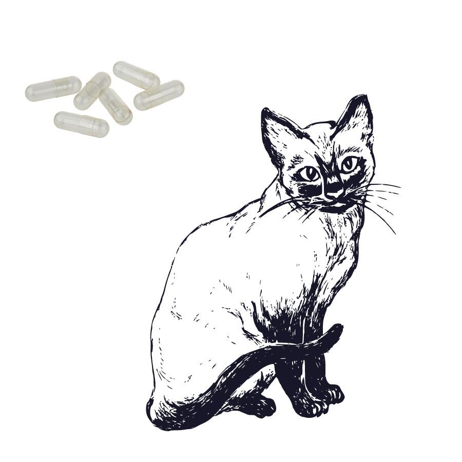 Katzenkapseln klar - Größe 3